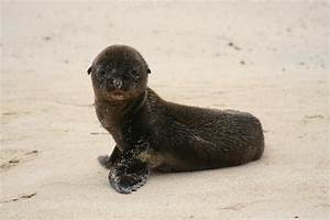 Baby Sea Lion - Picture of Galapagos Islands, Ecuador ...