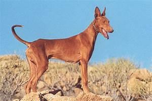 Ecco i gruppi nei quali si suddivisono le razze di cani