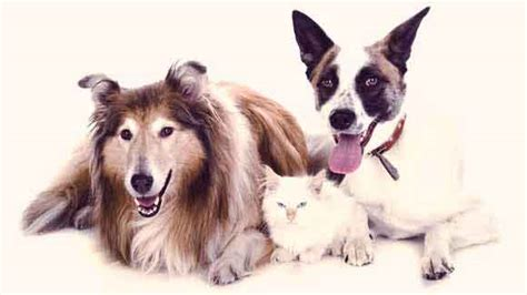 uti  dogs  cats  pets urinary tract infection