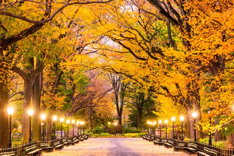 Fall Desktop Backgrounds New York by What To Do In The Fall In New York City Take New York Tours