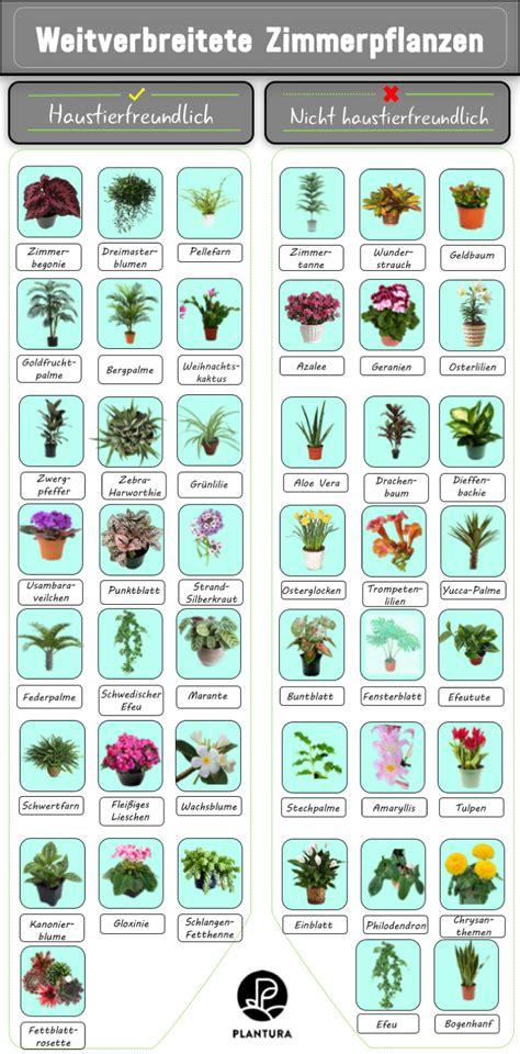 Zimmerpflanzen Richtig Pflegen 7 Tipps by 10 Giftige Zimmerpflanzen F 252 R Haustiere Garten Tipps