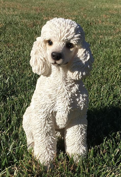 white toy poodle dog statue  natures gallery