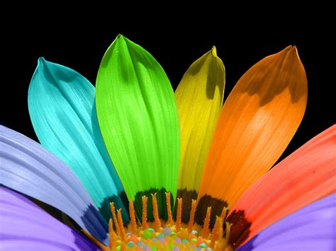 flower colors flower color petals wallpapers hd wallpapers id 5681