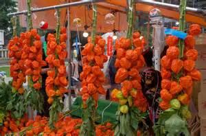 Chinese Flower Japanese Lantern