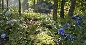 Pflanzen Für Nordseite : ideen f r schattige pl tze im garten mein sch ner garten ~ Frokenaadalensverden.com Haus und Dekorationen