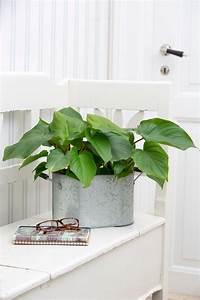 Pflegeleichte Pflanzen Für Die Wohnung : floradania marketing pflegeleichte pflanzen f r die wohnung ~ Michelbontemps.com Haus und Dekorationen