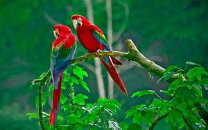 Beautiful Birds Wallpapers Free Download - | cute birds ...
