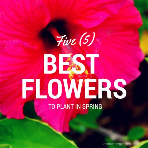 best flowers to plant in five 5 best flowers to plant in spring that are big about the garden magazine