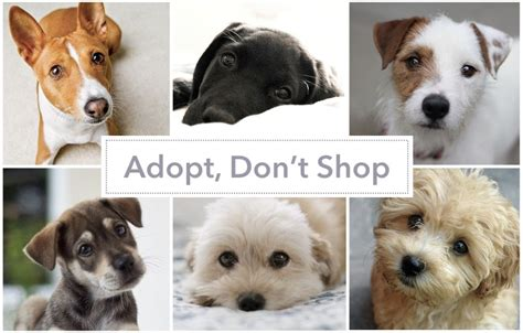 adopt  dog  hong kong