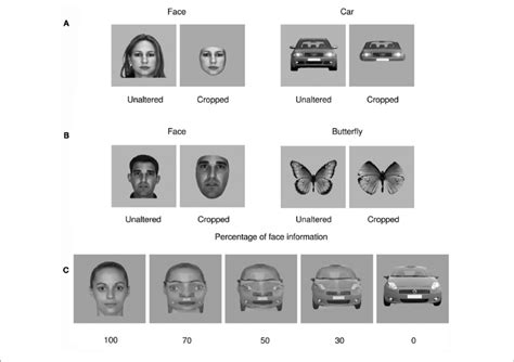   Examples of stimuli used in all experiments. (A) Example of a cropped...   Download Scientific ...