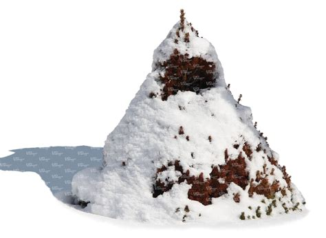 decorative fir covered with snow cut out trees and