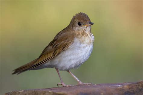 are human behaviors affecting bird communities in