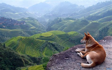 Dogs See Landscape Wallpaper Free #12025 Wallpaper High