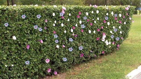 nettoyage canape 10 haies de jardin pour vous séparer de votre voisin