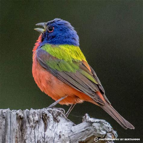 birding tips for the sunny southeast birdhousesupply com
