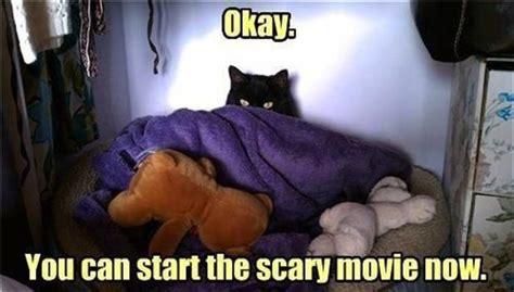 Funny Scary Memes - funny scaredy cat