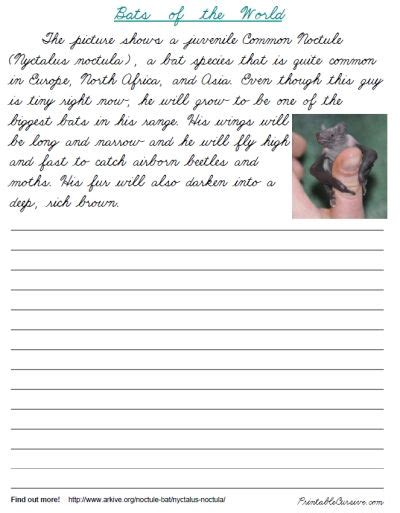 free cursive handwriting practice bats of the world 12
