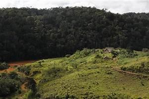Zahamena National Park Madagascar