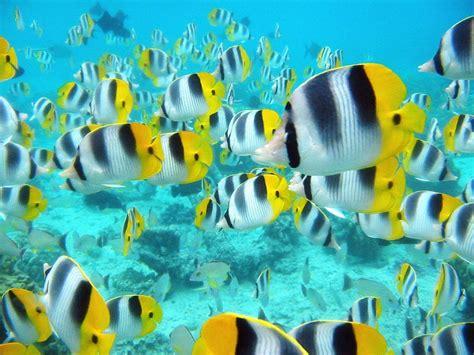Marine Life Sea Life Wallpaper 7591153 Fanpop
