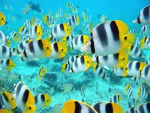 Sea Life images Marine Life wallpaper photos (7591153)