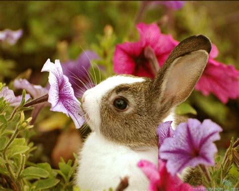 adorable backgrounds bunny backgrounds wallpaper cave