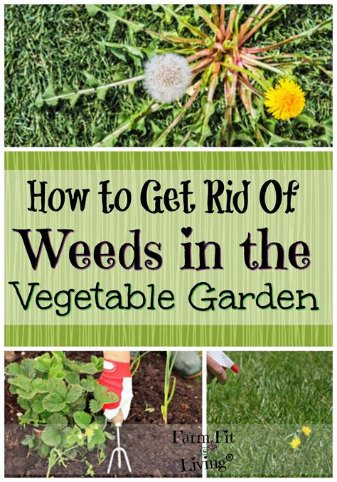 rid  weeds  vegetable gardens farm fit living