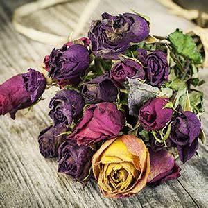Blumen Trocknen Ohne Farbverlust : blumen trocknen tipps f r eine nat rliche deko aus bl ten ~ A.2002-acura-tl-radio.info Haus und Dekorationen