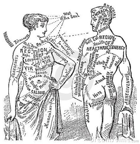 medical anotomical vintage diagram illustration royalty