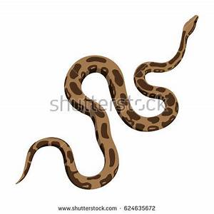 """yellow Anaconda"" Stock Images, Royalty-Free Images ..."