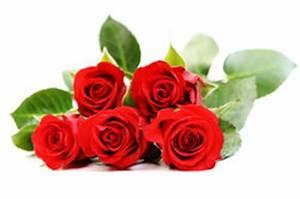 Gelbe Rose Bedeutung : 5 rosen die bedeutung von zahlen in der blumensprache ~ Whattoseeinmadrid.com Haus und Dekorationen