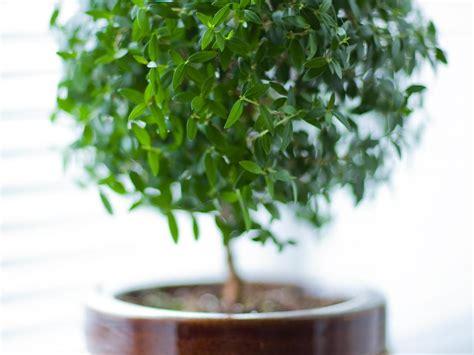 plante dans la chambre mettre une plante dans sa chambre bonne ou mauvaise idée