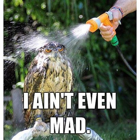 I Aint Mad Meme - owl i ain t even mad i ain t even mad know your meme