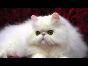 The most beautiful cats in the world - YouTube