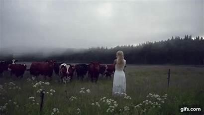 Kulning Swedish Sweden Jonna Jinton Cow Cows