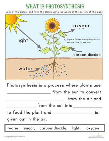 science primary worksheets science best free printable