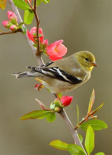 beautiful birds images kute groupcom