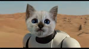 wars cats wars the awakens teaser trailer cat reaction