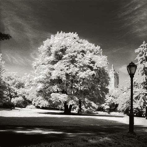 photo entry central park tree classic photography  ralf