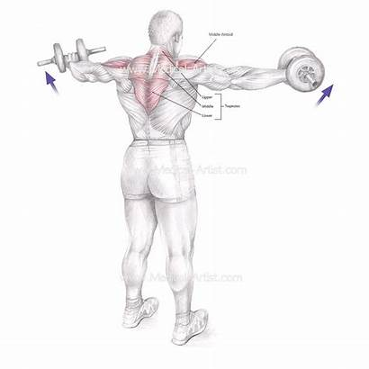 Medical Illustration Illustrations Lateral Raise Pencil Thousands