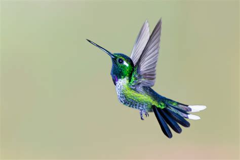 adorable facts  hummingbirds mental floss