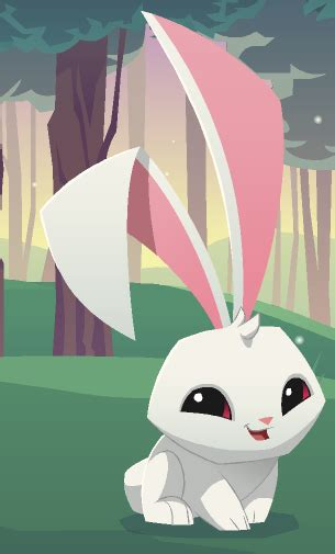 bunny animal jam wiki fandom powered  wikia