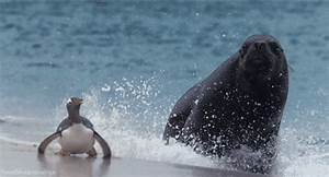 Sea Lion Running GIF - Find & Share on GIPHY
