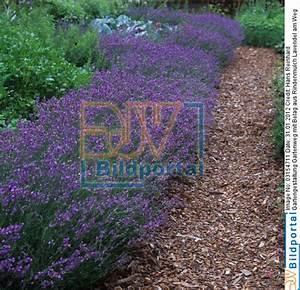 Rindenmulch Als Gartenweg : details zu 0003154711 gartengestaltung gartenweg mit ~ Lizthompson.info Haus und Dekorationen