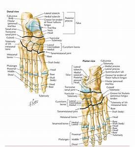 Managing Your Foot Pain  U2014 Sian Smale