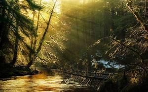 Wallpaper, Sunlight, Trees, Landscape, Forest, Sunset, Nature, Reflection, Snow, Branch