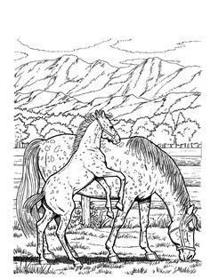 die  besten bilder von pferde coloring books vintage coloring books und coloring pages