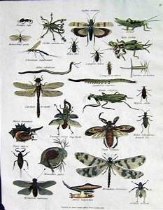 Insects Names