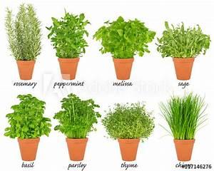 Kräuter Pflanzen Topf : collection set of herbs in pots reihe von k chenkr uter ~ Lizthompson.info Haus und Dekorationen