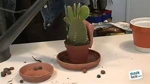 Comment Entretenir Un Cactus : comment entretenir un cactus youtube ~ Nature-et-papiers.com Idées de Décoration