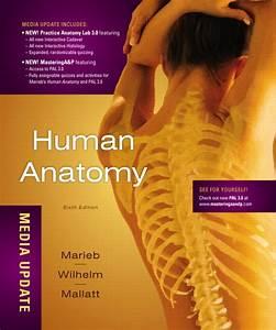 Human Anatomy And Physiology Marieb 6th Edition Pdf